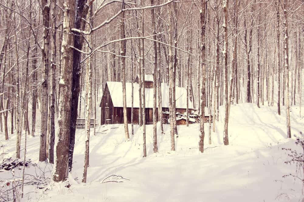 Cabin in the woods covered in snow