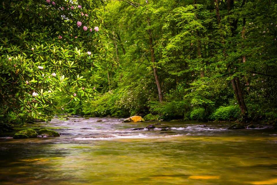 Peaceful river in Smoky Mountains