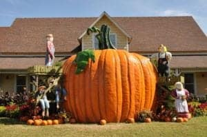 A giant pumpkin at the Dollywood Welcome Center during the Harvest Festival.
