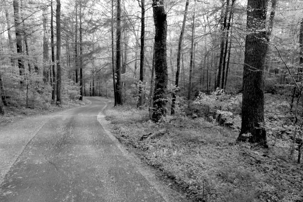 Black and white photo of the Roaring Fork Motor Nature Trail.